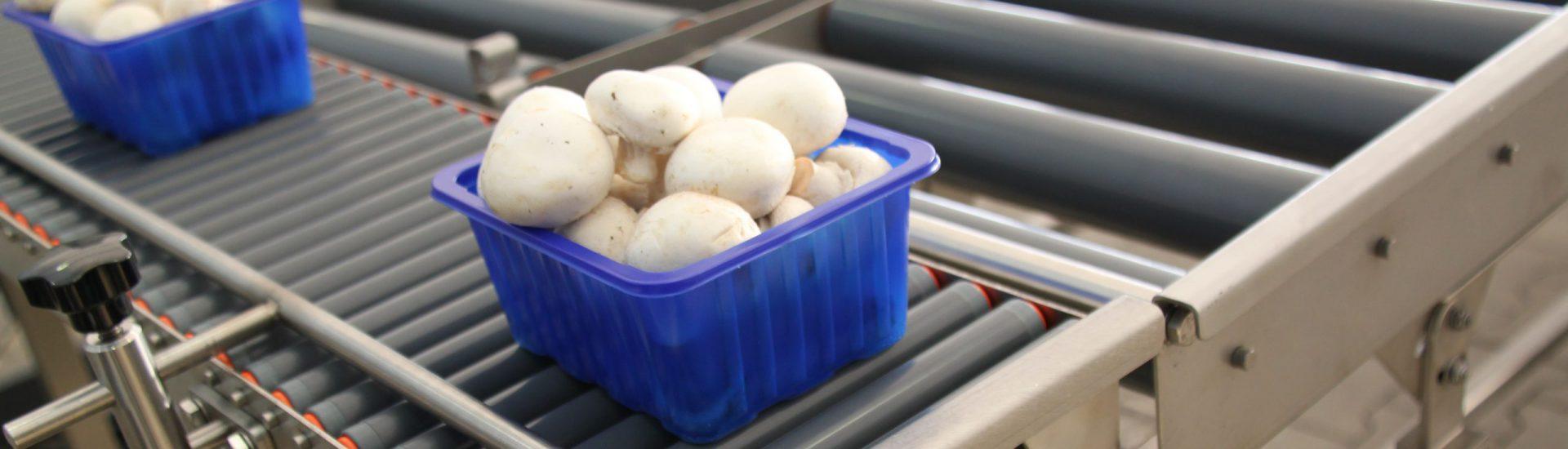 Bakje champignons op een rollenbaan